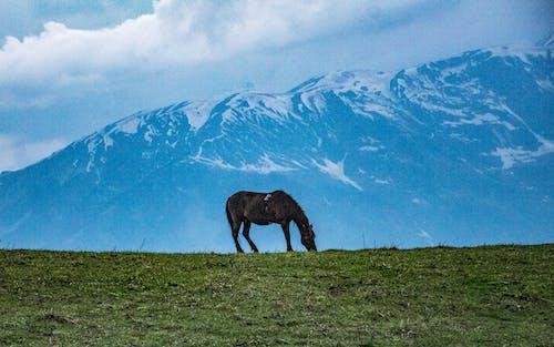 Foto profissional grátis de área, campina, campo de feno, cavalaria
