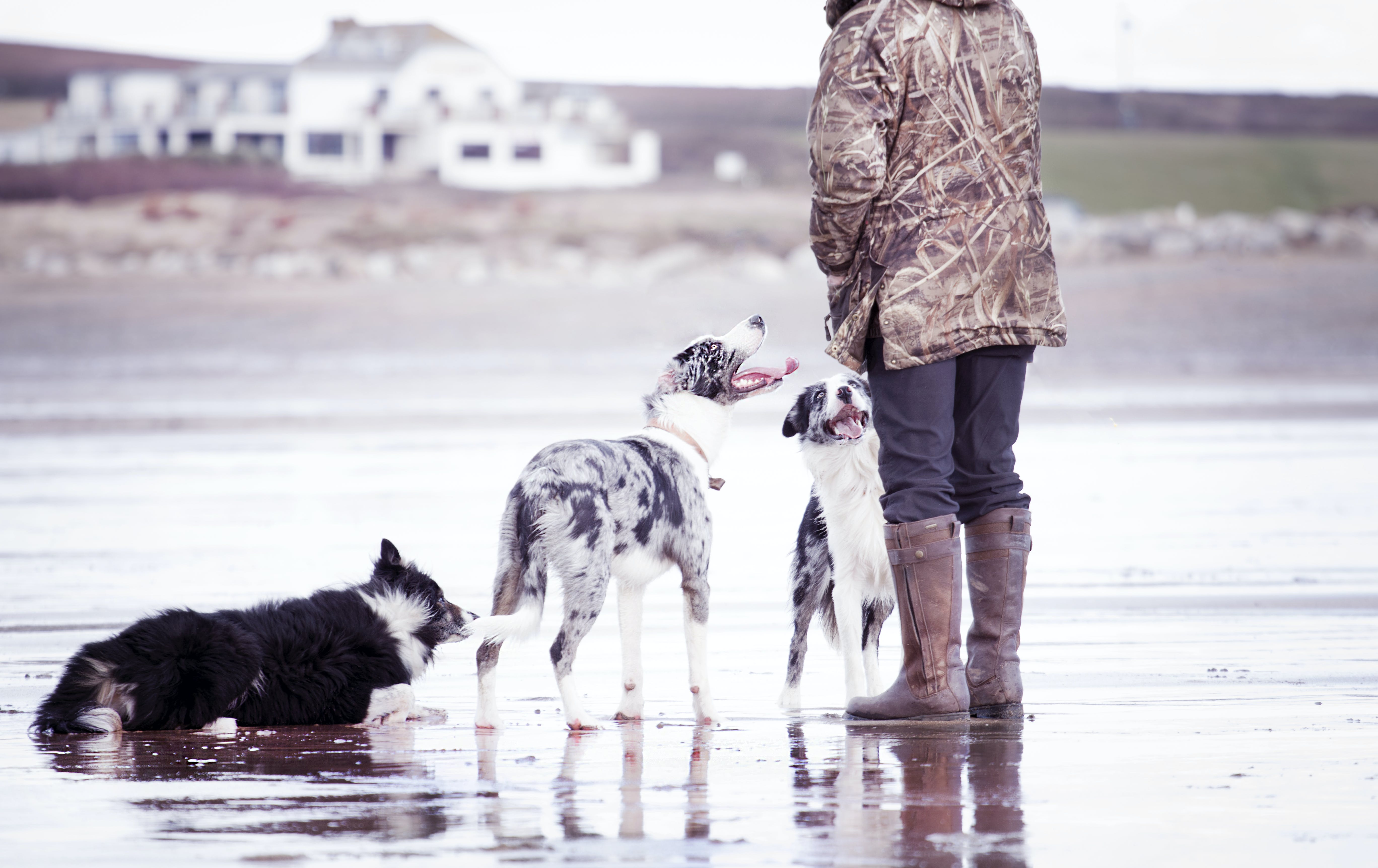 Person Together With Dogs in Shallow Focus Photography