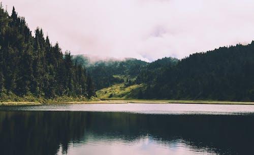 Foto profissional grátis de água, árvore, árvores, beira do lago