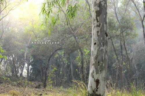 Photos gratuites de forêt, photo de nature, photographie de nature