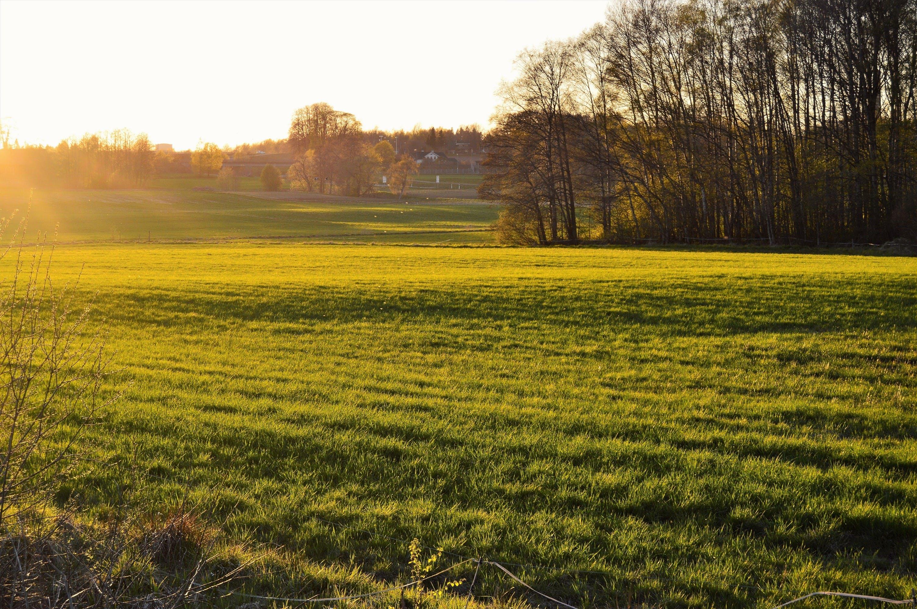 evening, field, forest