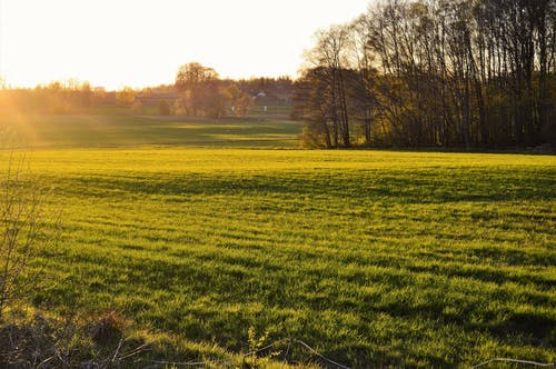 Free stock photo of evening, field, forest, grass