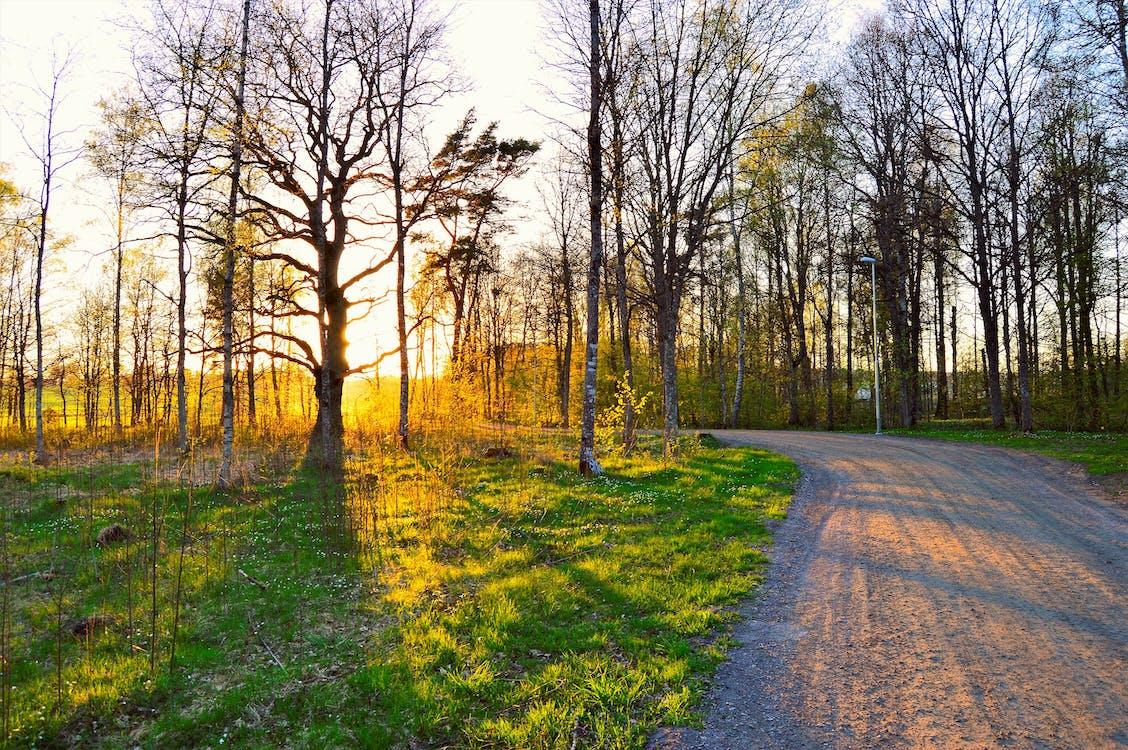 Gratis stockfoto met begeleiding, bladeren, bomen