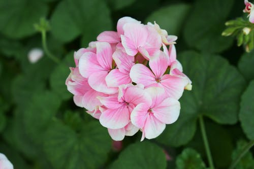 Photos gratuites de été, fleur, fleur de printemps
