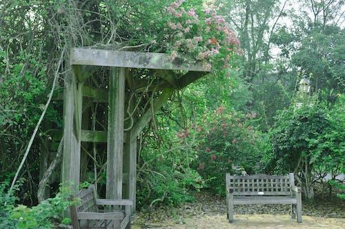 Photos gratuites de banc, fleurs, jardin