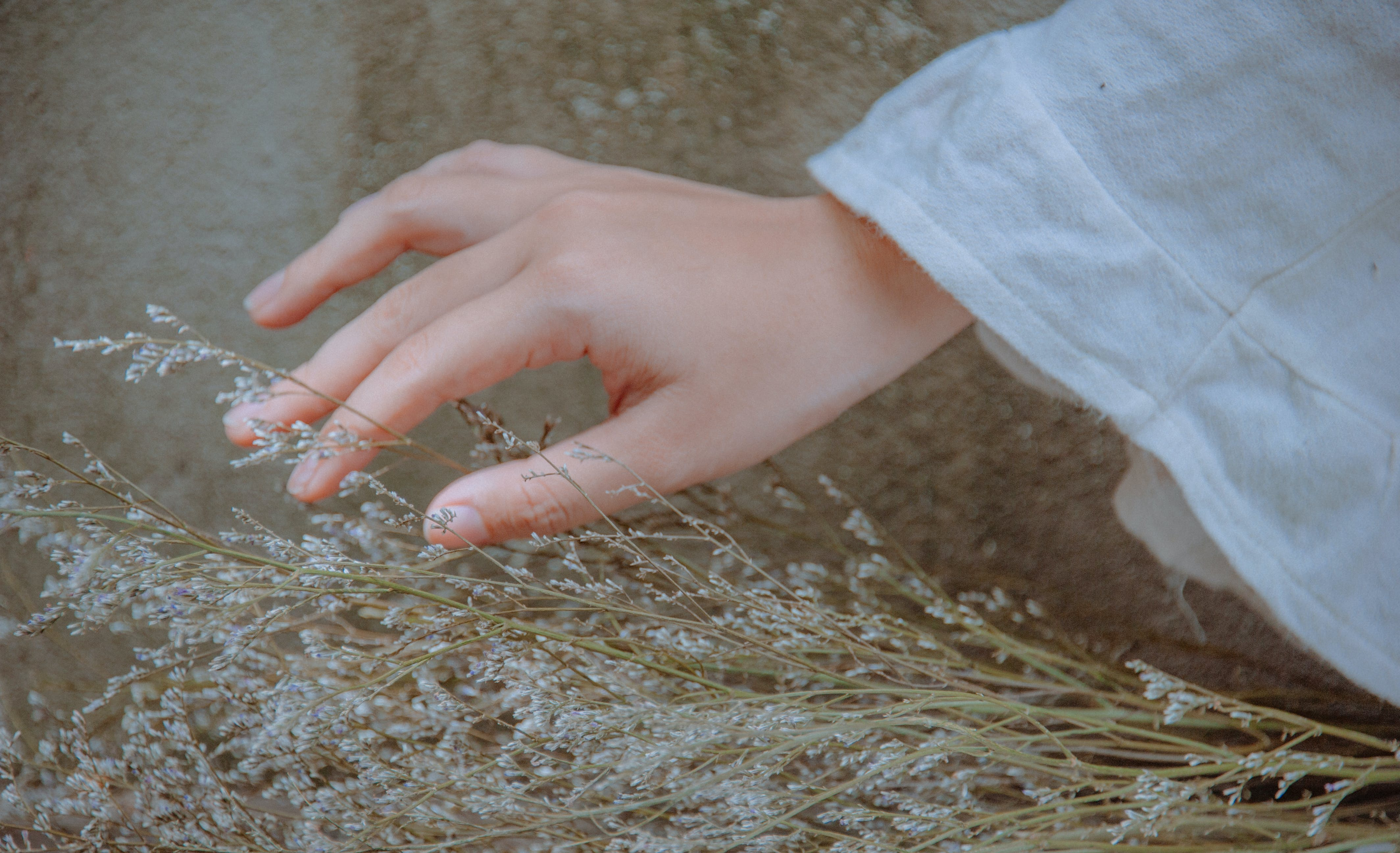 Close-Up Photography of Hand Near Plant