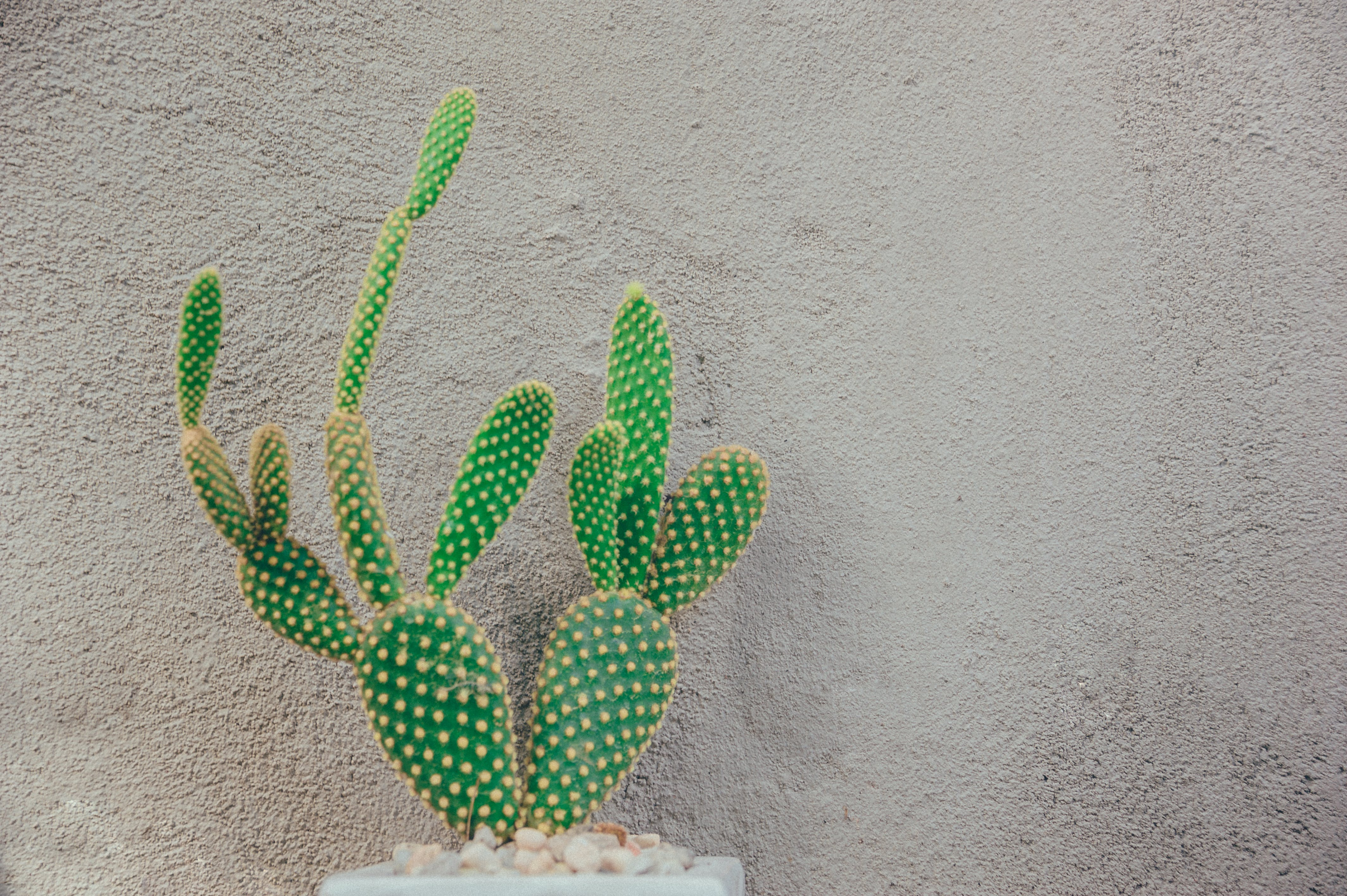 Green Cactus Near Gray Concrete Wall