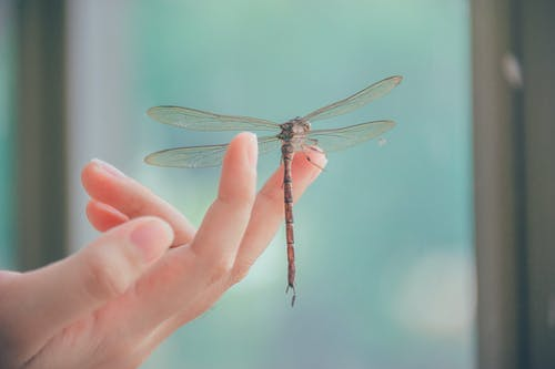 Close-Up Photography of Dragonfly Perched on a Finger