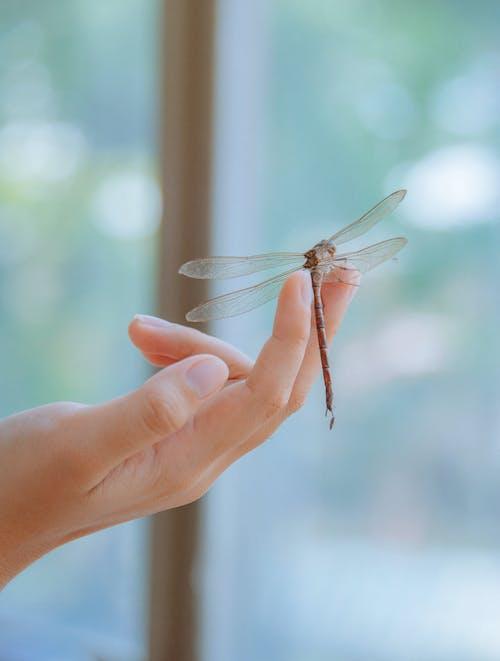 Dragonfly Zat Op Menselijke Vinger In Close Upfotografie