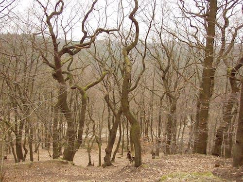 Безкоштовне стокове фото на тему «#forest, дерева, ліс з осінньою атмосферою»