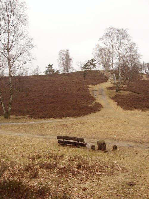 Fotos de stock gratuitas de Alemania, bosque otoñal, marrón, parque