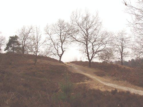 Fotos de stock gratuitas de Alemania, bosque, bosque otoñal, marrón