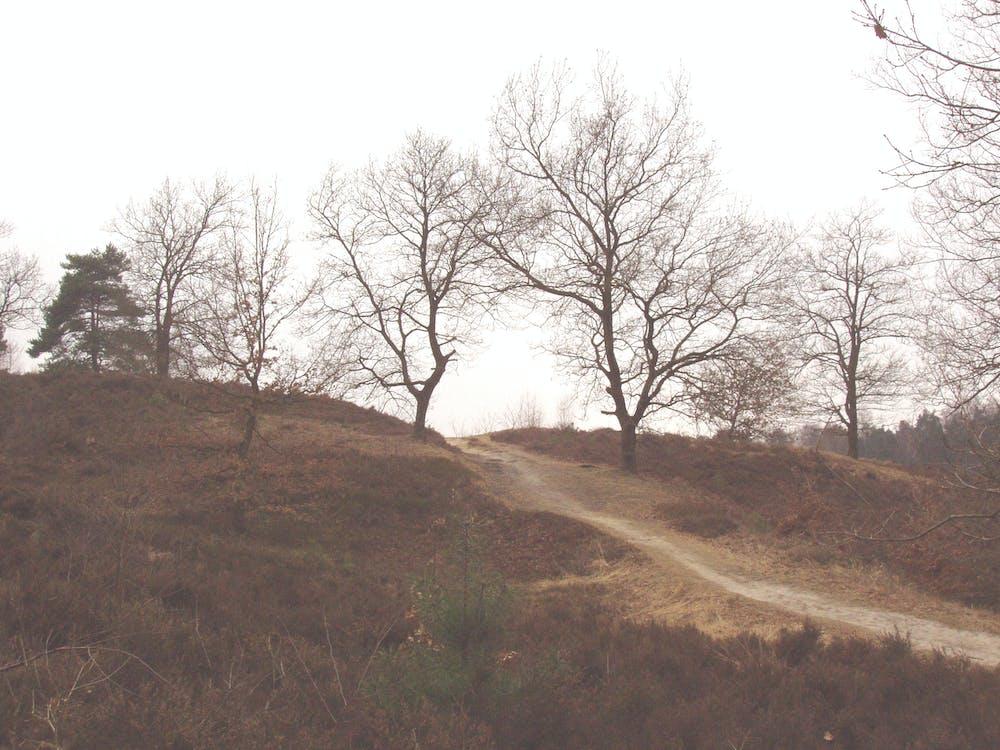 Alemania, bosque, bosque otoñal