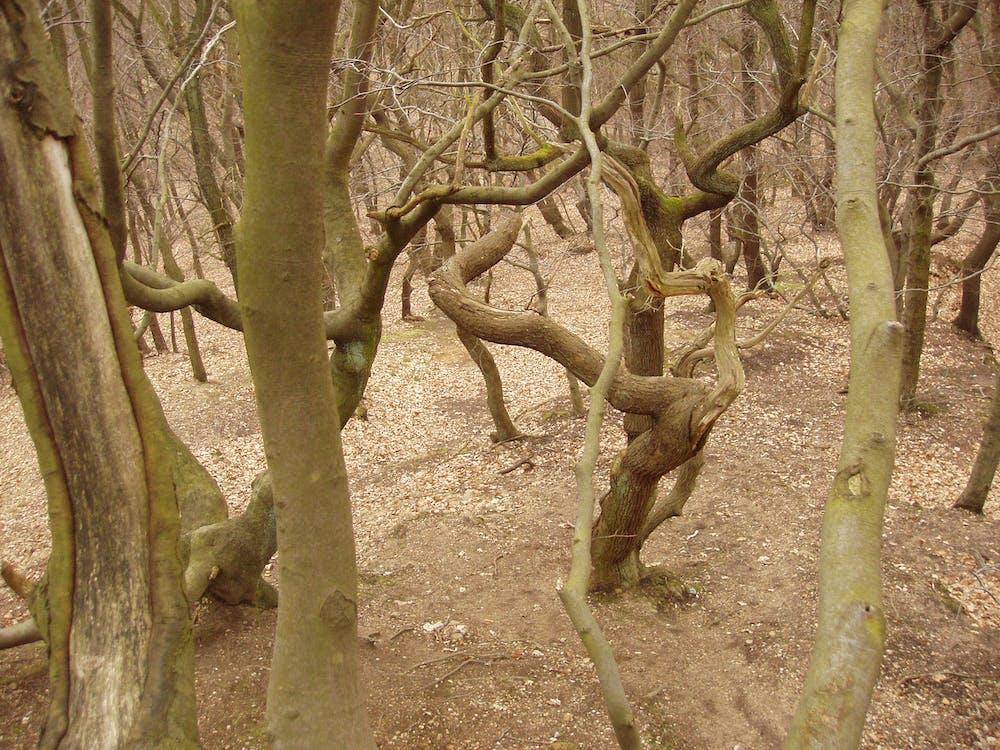 #bosque, arboles