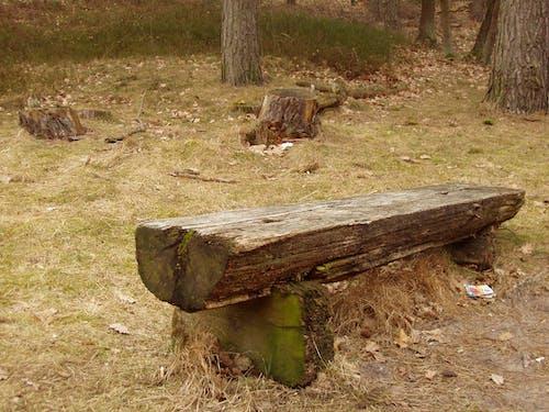 Безкоштовне стокове фото на тему «дерев'яна лавка, лавка, лавки, паркова лавка»