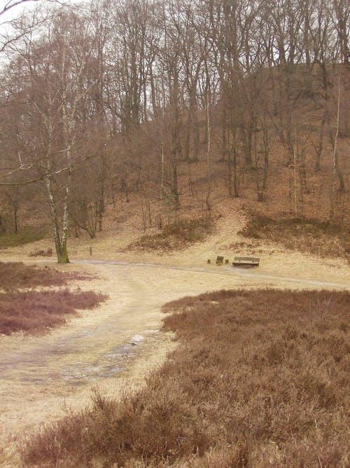 Бесплатное стоковое фото с германия, коричневый, лес, Осенний лес настроение