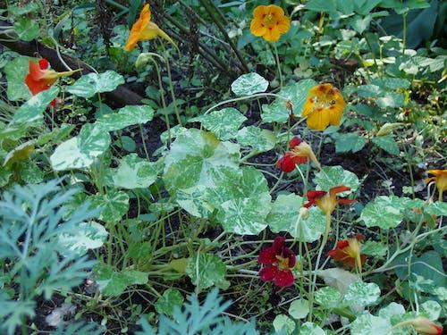 Ingyenes stockfotó darált, erdei talaj, fű, növényzet témában