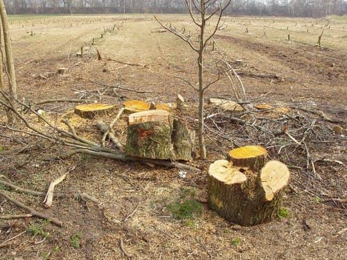 Free stock photo of cleared field, cut trees, field, stump