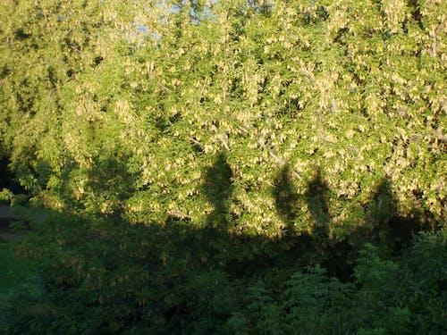 Fotos de stock gratuitas de arboles, sombra, sombra humana, sombras