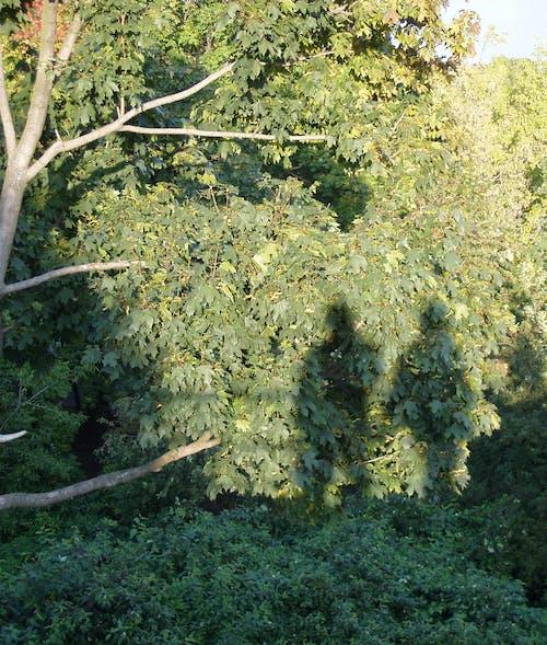 Fotos de stock gratuitas de árbol, humano, humanos, sombra