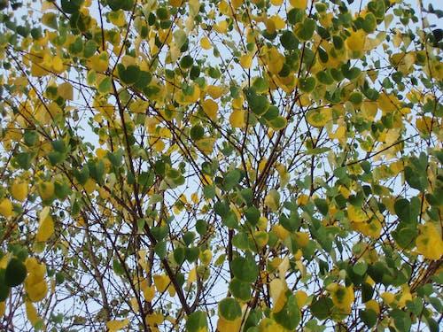 Fotos de stock gratuitas de amarillo, árbol, verde
