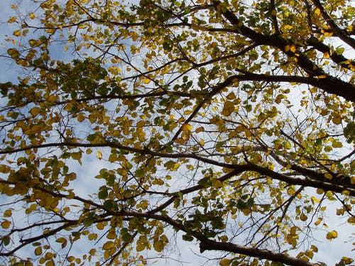 Free stock photo of tree branches, yellow