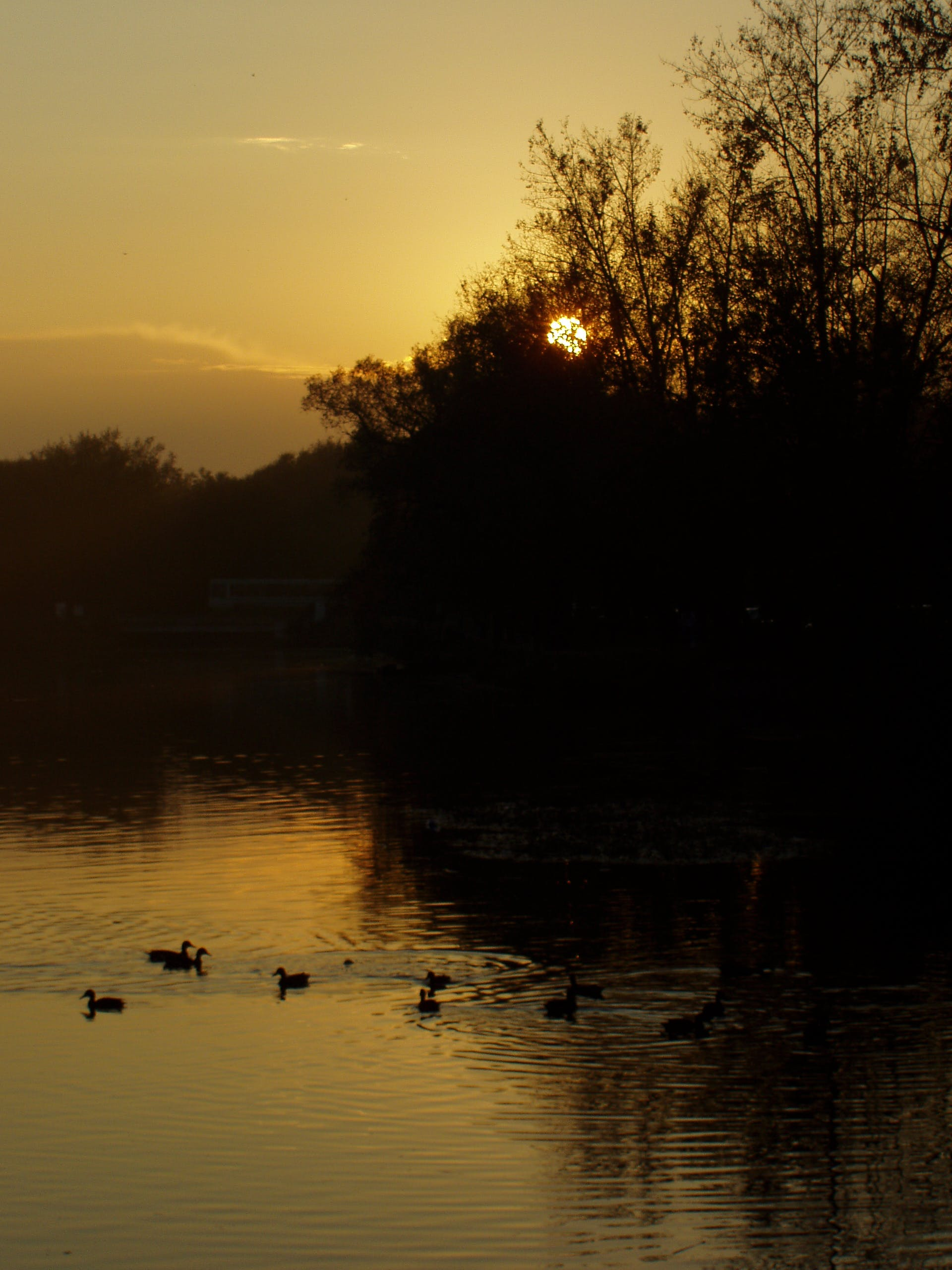 Free stock photo of dark, ducks, evening sky, evening sun