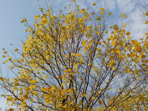 Ingyenes stockfotó fa, sárga témában
