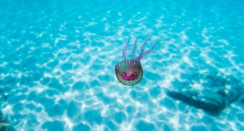 Fotobanka sbezplatnými fotkami na tému čistá voda, fialová, Malorka, modrá