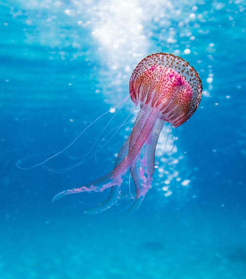 Shallow Focus Photo of Pink and Brown Jellyfish