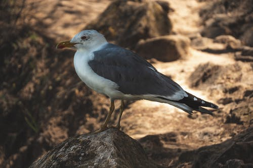 Foto d'estoc gratuïta de #bird, gavina, sorra