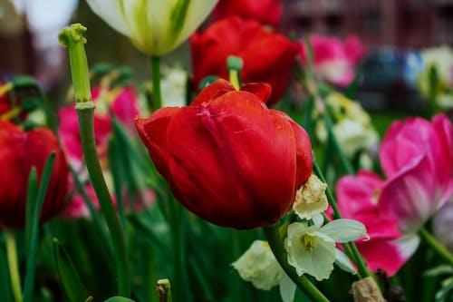Free stock photo of beautiful flowers, nature, park