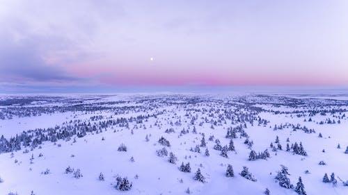 ağaç, ağaçlar, akşam, ay içeren Ücretsiz stok fotoğraf