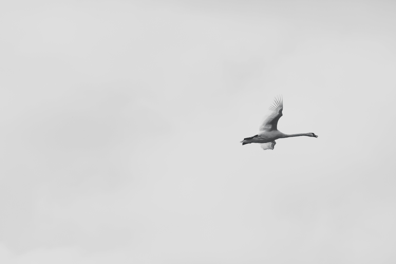 fliegen, himmel, tageslicht