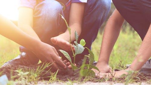 คลังภาพถ่ายฟรี ของ #ต้นไม้, ã¡rvore, bosk, crianã§as
