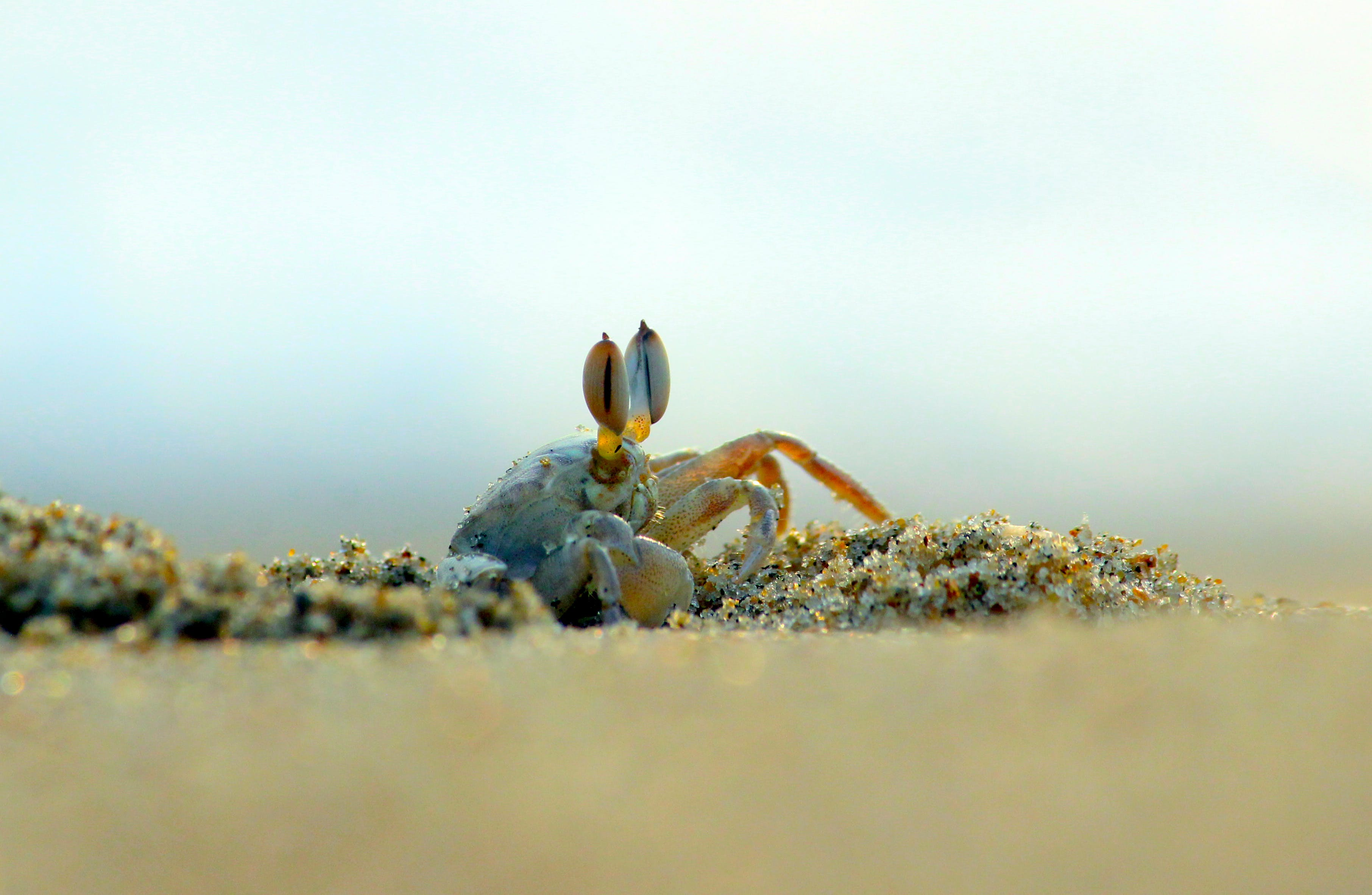 Crab In Close-up Photography