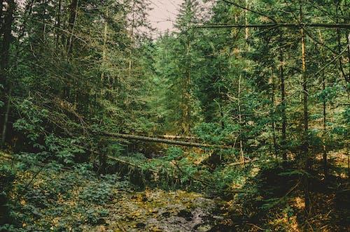 Foto profissional grátis de árvore caída, árvore no chão, árvores, cênico