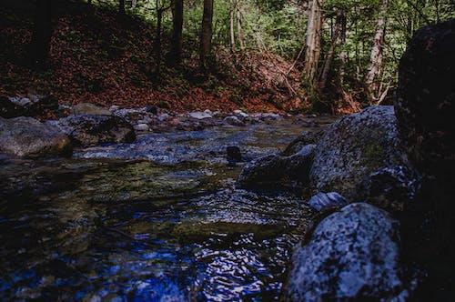 락, 록, 숲, 잔디의 무료 스톡 사진