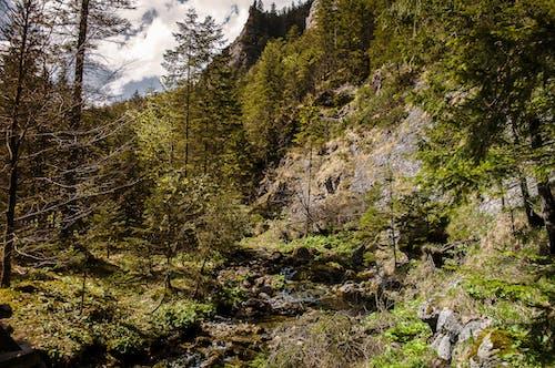 คลังภาพถ่ายฟรี ของ ป่า, ภูเขา, มีแต่หิน, ใบไม้แห้ง