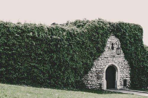 คลังภาพถ่ายฟรี ของ กลางแจ้ง, ทางเข้าประตู, บ้าน, ปาร์ค