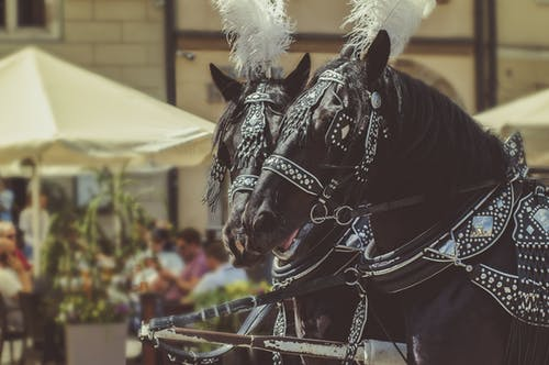 Two Black Horses Wearing Accessories