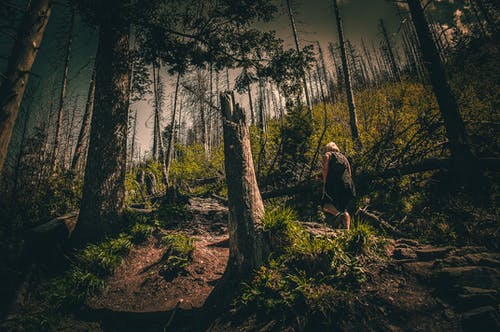 Person in Black Top Walking Through Forest