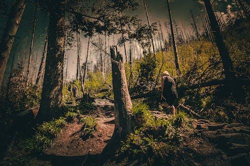 Kostenloses Stock Foto zu abend, bäume, berg, bergwandern