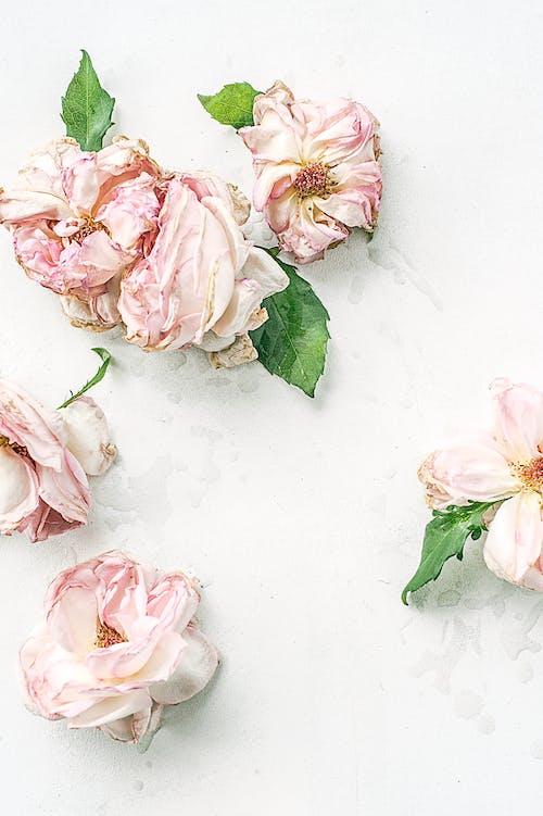 植物群, 綻放, 花, 開花 的 免费素材照片