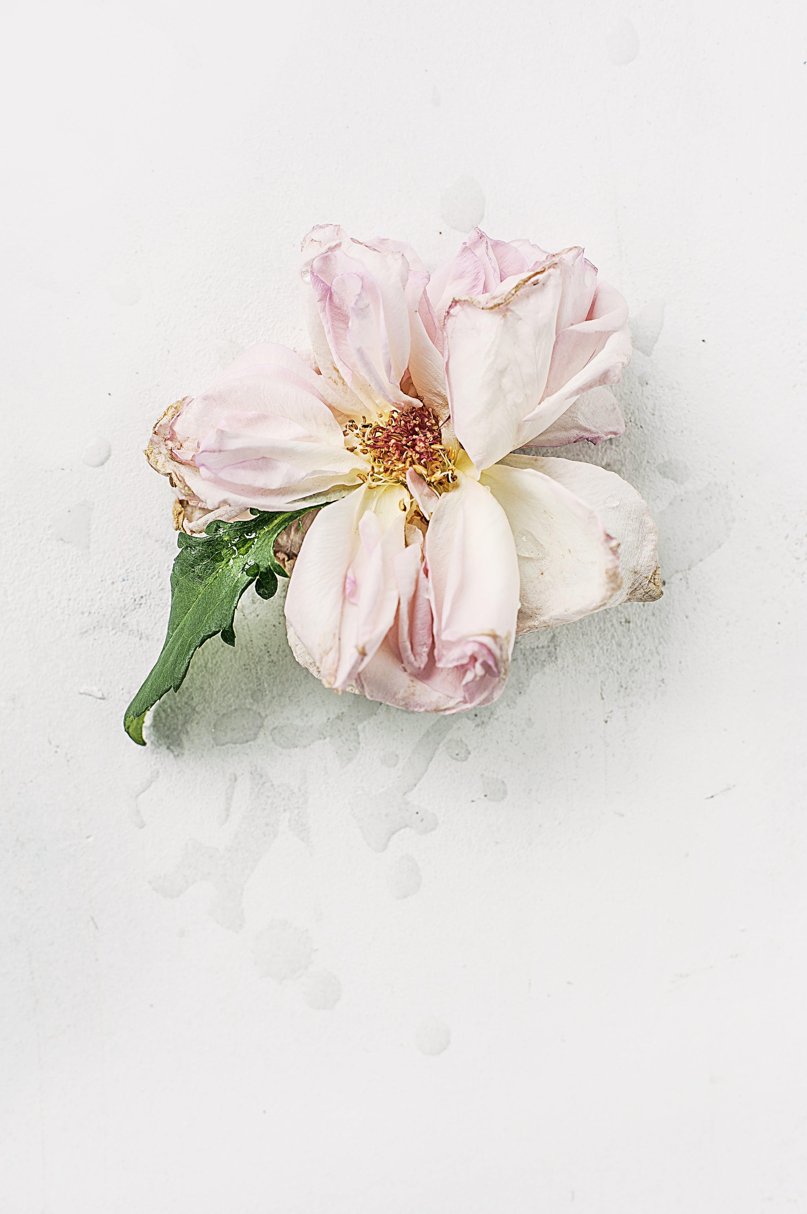Pink Dried Flower