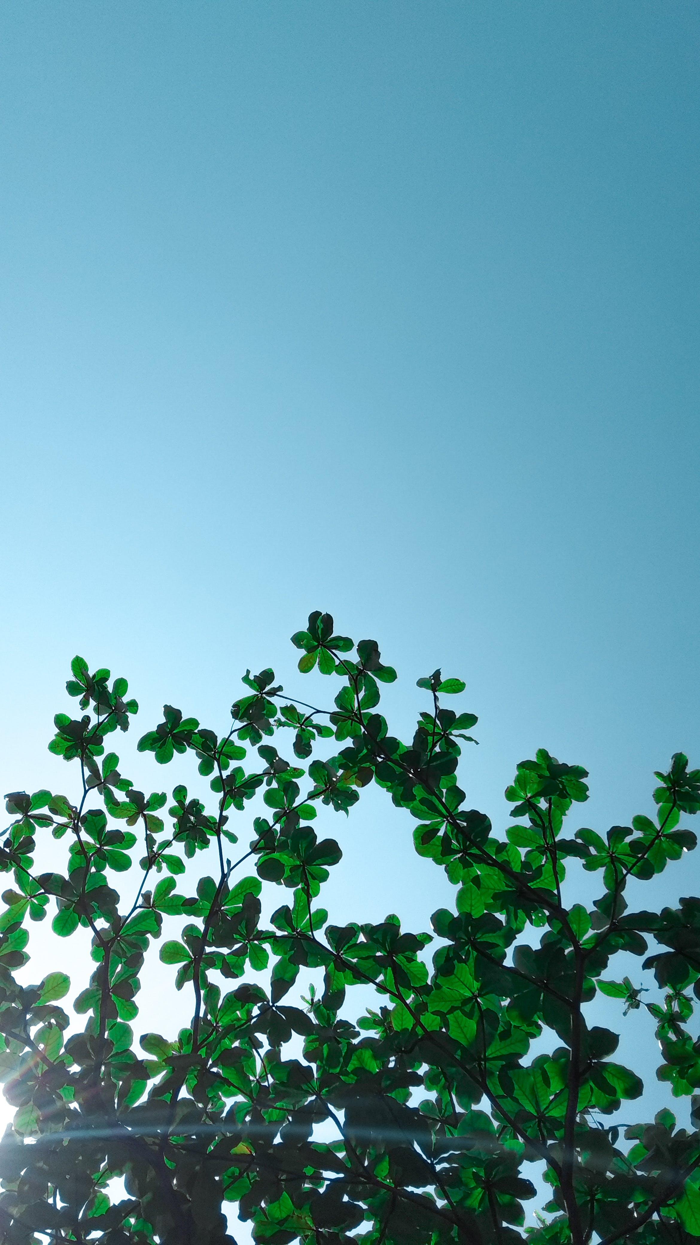 Free stock photo of #botanical #bright #closeup #green #garden #nature