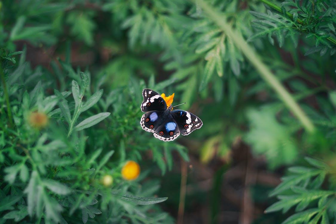 macro, έντομο, λουλούδι