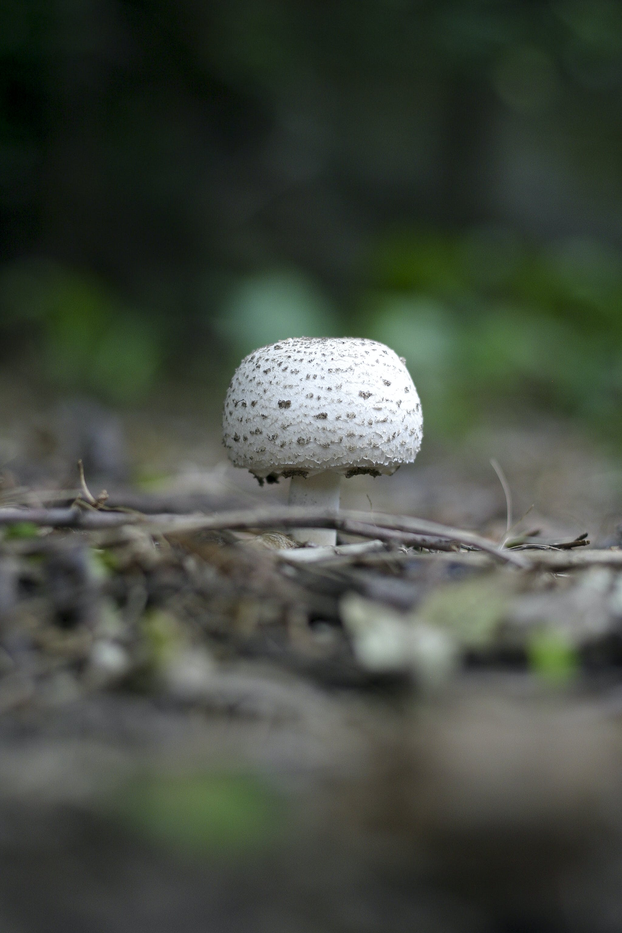 Round White and Grey Mushroom on Forest Floor