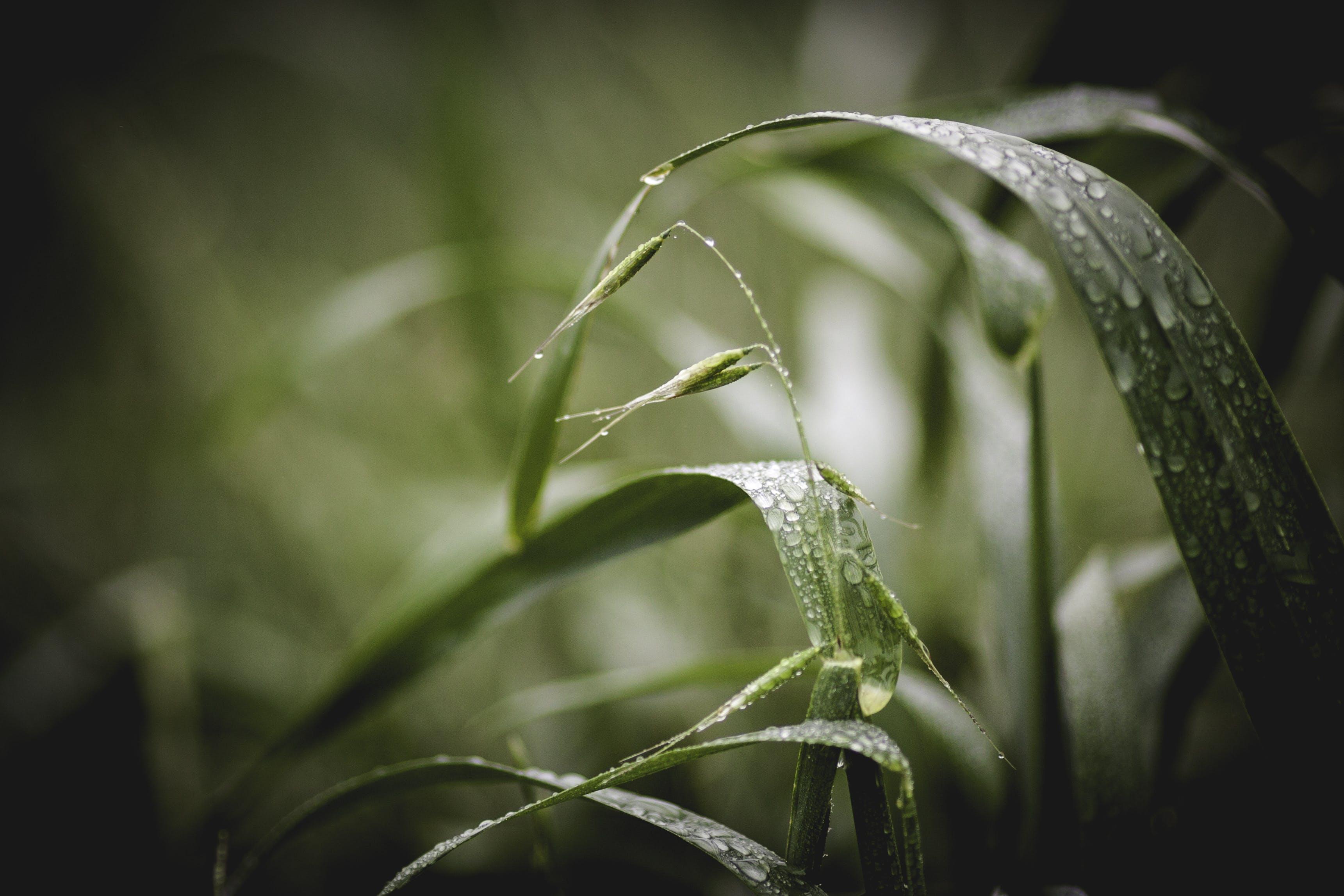 Gratis arkivbilde med dugg, dybdeskarphet, gress, grønn