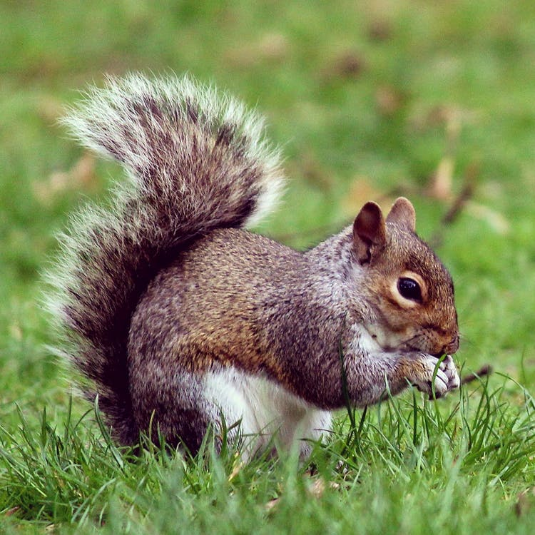 #squirrel #nature #wildlife